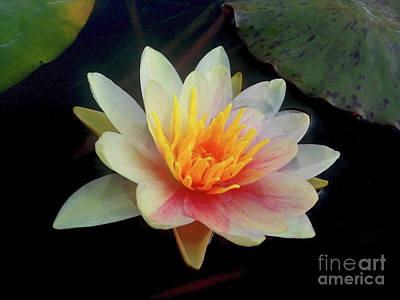 Photograph - The Botanical Garden Zagreb - Water Lily #4 by Jasna Dragun