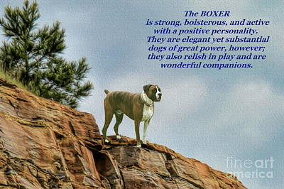 Photograph - The Boxer by Myrna Bradshaw