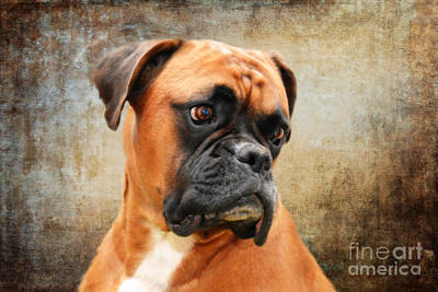 With Red Photograph - The Boxer by Nichola Denny