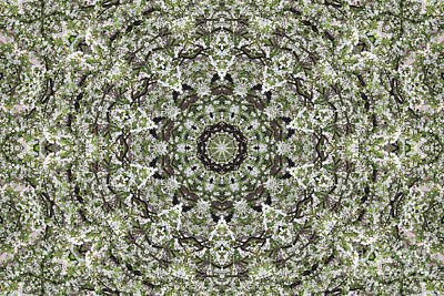 Digital Art - The Branch Kaleidoscope by Donna Munro