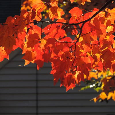 Photograph - The Brilliance Of October by Bill Tomsa