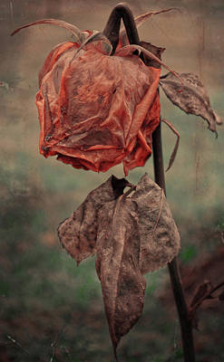 Photograph - The Broken Rose  by The Artist Project
