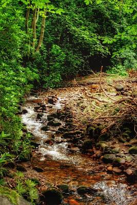 Photograph - The Brook by Isabella F Abbie Shores FRSA