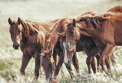 Photograph - The Brown Fillies by Jennie Marie Schell