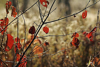 Photograph - The Browns Of Autumn by Debbie Oppermann