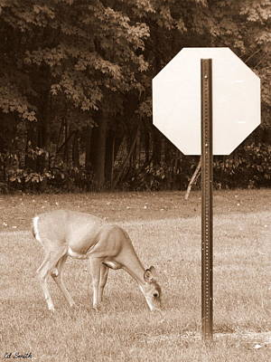 The Buck Might Stop Here Art Print by Ed Smith