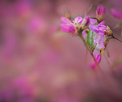 Photograph - The Buds Of Spring by Alan Campbell