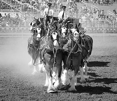 The Budweiser Clydesdales Art Print