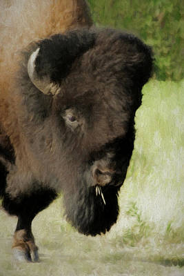 Digital Art - The Buffalo Da by Ernie Echols