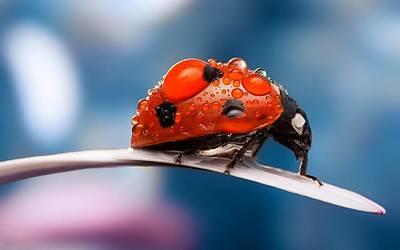The Bug Art Print by Thomas M Pikolin