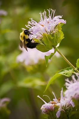 The Bumble Bee Art Print by Chad Davis