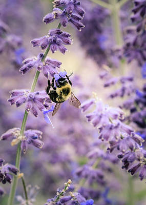 Photograph - The Bumblebee And The Lavender by Joni Eskridge