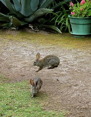 Photograph - The Bunny Hop by Michael Cervin