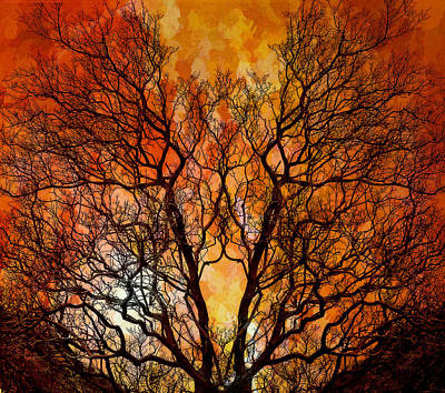Burning Bush Photograph - The Burning Bush by Lynn Andrews