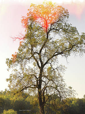 Photograph - The Burning Tree by Lena Wilhite
