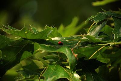 Photograph - The Busy Lady Bugs by Angie Tirado