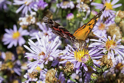 Photograph - The Butterfly And Flowers by Steven Parker