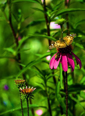 Photograph - The Butterfly And The Bee by Nadalyn Larsen