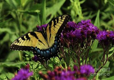 Photograph - The Butterfly Buffet by J L Zarek