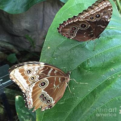 Photograph - The Butterfly Couple by Barbara Plattenburg