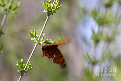 Photograph - The Butterfly Effect by Rick Rauzi