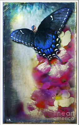 Photograph - The Butterfly Fairy by Sandra Clark