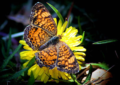 Winter Wedding Flowers Photograph - The Butterfly  by Karen Scovill