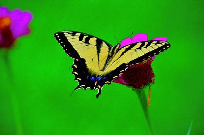 Walter Gantt Wall Art - Photograph - The Butterfly by Walter Gantt