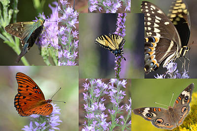 Photograph - The Butterfly's Of Today's Outing by rd Erickson