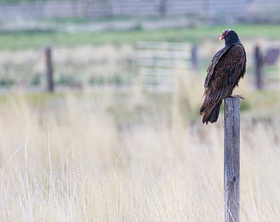 Photograph - The Buzzard by Steve McKinzie