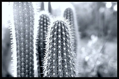 Desert Photograph - The Cacti Family by Courtney Lively