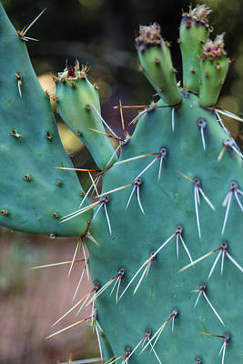 Photograph - The Cactus Ion Utah  by John McGraw