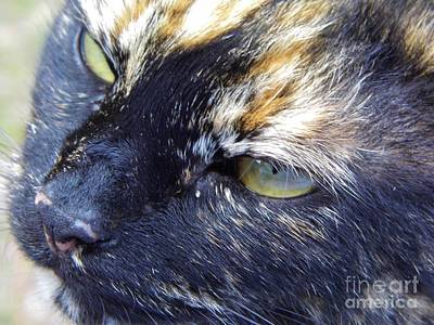 Photograph - The Calico Nose by D Hackett