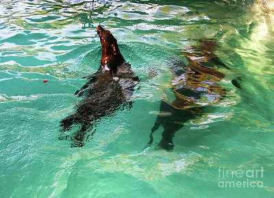 Photograph - The California Sea Lion by Jasna Dragun