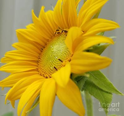 Photograph - The Call Of Summer by Maria Urso