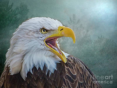 Photograph - The Call Of The Eagle by Brian Tarr