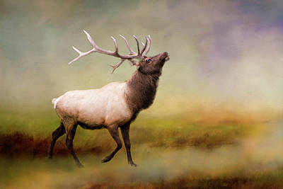 Photograph - The Call Of The Elk by Phyllis Taylor