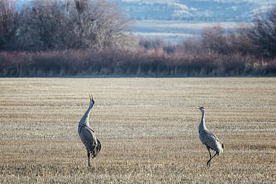 Photograph - The Call Of The Sandhill Cranes by Belinda Greb