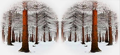 Digital Art - The Calm Of Winter In The Woods by Rod Jellison