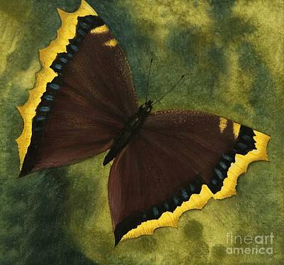 Fluttering Painting - The Camberwell Beauty Or The Mourning Cloak by David Nockels