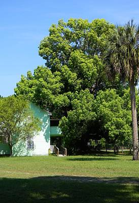 Summerfield Photograph - The Camphor Tree by Warren Thompson