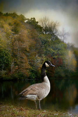 Goose Photograph - The Canadian Goose by Jai Johnson