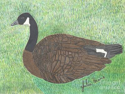 Drawing - The Canadian Goose by Julia Hanna