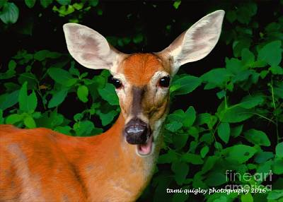 Photograph - The Candid Doe  by Tami Quigley