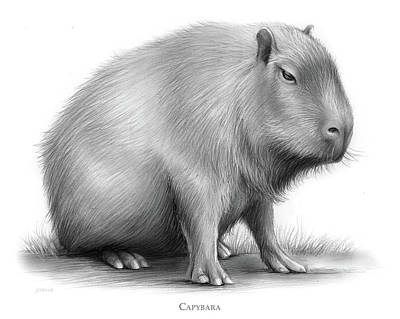 Animals Drawings - The Capybara by Greg Joens