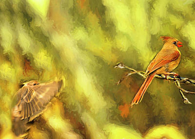 Photograph - The Cardinal And The Finch by Kay Brewer