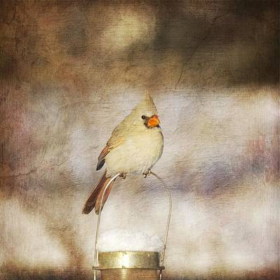 Digital Art - The Cardinal by Heidi Hermes