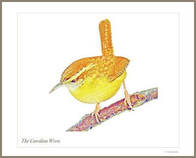 Photograph - The Carolina Wren, Animal Portrait by A Gurmankin
