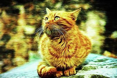 Photograph - The Cat 18818 by Ray Shrewsberry