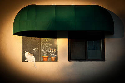 Photograph - The Cat And The Bird by Roger Mullenhour